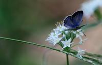 中秋その3 - 紀州里山の蝶たち