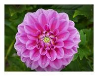 9月のフラワーパーク2(暑さ越えた花)(9/13) - あおいそら