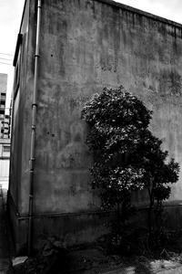 kaléidoscope dans mes yeux2019新潟島#74 - Yoshi-A の写真の楽しみ