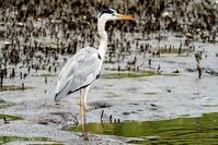 写真日記・水辺の鳥たち・2019.9.13-② - ココカメラ【であいの・き】