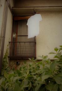 白いTシャツ in 神楽坂 - 雲母(KIRA)の舟に乗って