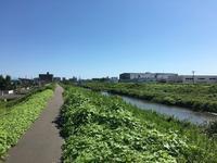BLUE IN GREEN(街から海へ) - おさんぽ日記