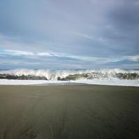 海辺まで - TACOSの野鳥日記