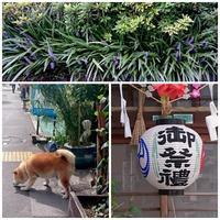 天祖神社お祭り - フラワースタジオクレール