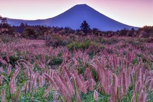 力芝 - 富士山に夢中