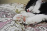 Sweet kitty 9 - 素顔のままで
