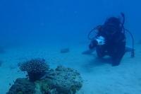 19.9.16バタバタからの、のんびり。連休。 - 沖縄本島 島んちゅガイドの『ダイビング日誌』
