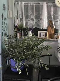 ひと抱えのオリーブの枝 - 流木民 第2話