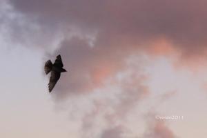 沖縄 出会った生き物たち ~野鳥と猫と蝶々と~ - 日々の贈り物(私の宇都宮生活)