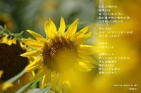 原動力 - 陽だまりの詩