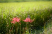 花と蝶 - feel a season