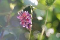 葛の花 - feel a season