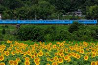 夏の花畑2019五條上野のひまわり畑 - 花景色-K.W.C. PhotoBlog