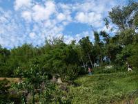 竹林 - Blue Planet Cafe  青い地球を散歩する