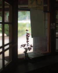 窓 - ぽとすのくずかご