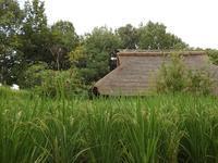 『木曽川水園の秋風景』 - 自然風の自然風だより