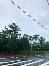 鎌倉心景「葉山」 - 海の古書店