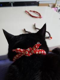 どっちにしようかにゃ・・・ - 猫の首輪屋★CAROL ~キチコの店長日記~