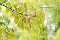 桜ほんのり秋化粧 - It's only photo 2