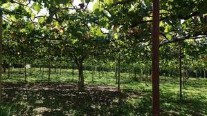 「今年の営業を終了致しました!」 - 東浦の葡萄屋  石田農園の作業日記