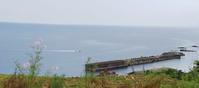 9月15日の佐渡見平コスモス畑 - 海辺のキッチン倶楽部もく
