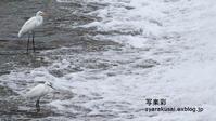鴨川雑景 - 写楽彩