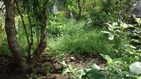 ヒメリンゴまで草取り - うちの庭の備忘録 green's garden
