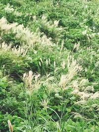 秋の草花 - 自然を見つめて自分と向き合う心の花