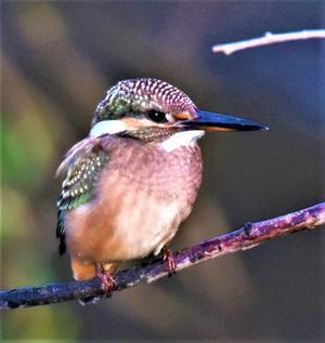 湿原の野の鳥と森のエゾリス便り -