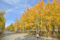 秋は黄葉がとんでもないのです!ミート・ザ・ワイルド 2019,09,11 - ヤムナスカ Blog