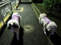散歩屋日誌【お泊り保育編2】 - サモエド クローカのお気楽日記