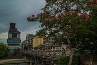 京都市内の百日紅 - 鏡花水月