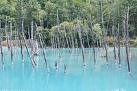 青い池は青かった(ガガーリン風?) - カメラトクラス。