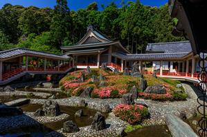 サツキ咲く曲水の庭(松尾大社) - 花景色-K.W.C. PhotoBlog