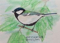 #野鳥スケッチ #ネイチャー・ジャーナル 『四十雀』Parus minor - スケッチ感察ノート (Nature journal)
