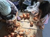 保存玉葱の手入れ - 田園に豊かに暮らす