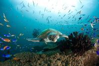 楽園 - Diving Life ~Aita pe'a pe'a~