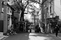 神木と祠 - tonbeiのはいかい写真日記