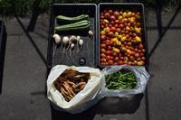自然栽培トマトがたくさん花豆の収穫 - 自然栽培 釧路日記