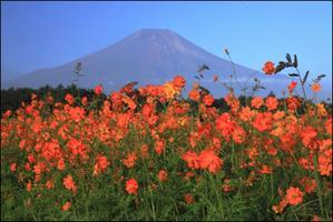 秋色の花の都 - 富士山大好き~写真は最高!