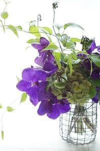 病院デー&花ナスとアジサイ、バンダのブーケ - お花に囲まれて