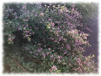 九月の道、畑、空 - マリカの野草画帖