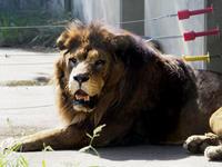 ライオンキングとプリンセス - 動物園放浪記