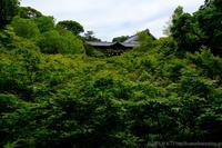 新緑の東福寺 - ぴんぼけふぉとぶろぐ2