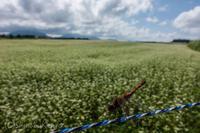 オイル交換 - 撃沈風景写真