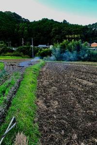稲刈り後から9月前半記録 - はな花季行/おっ!オッ?