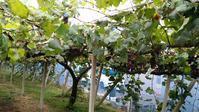 大塚葡萄園 - いつも笑顔で!Ver2