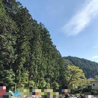【家族の時間】秋川渓谷で息子とマス釣りを楽しんできました - 40歳からはじめる「暮らしの美活」