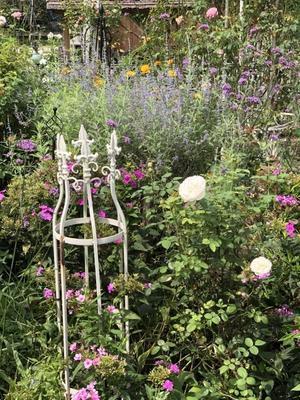 9月中旬の庭の様子 - 小さな棲家