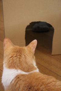 段ボールハウス - ぎんネコ☆はうす